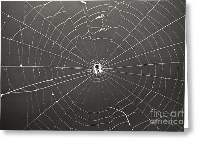 Leslie Leda Greeting Cards - Itsy Bitsy Spider Greeting Card by Leslie Leda