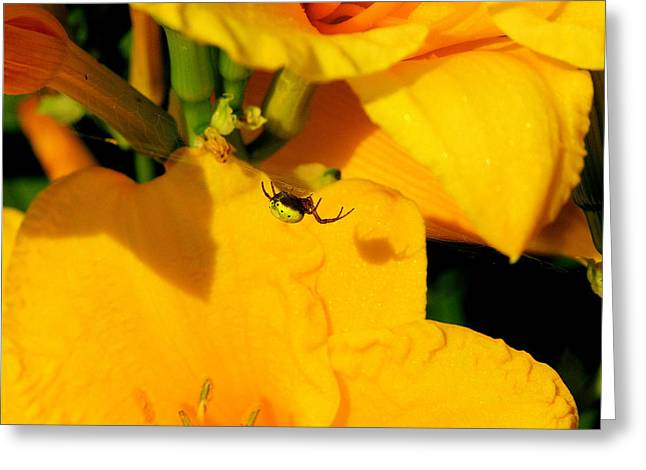 Itsy Bitsy Spider Greeting Cards - Itsy Bitsy Spider Greeting Card by Susan Moore