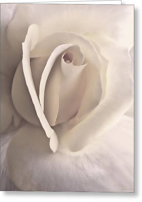 Ivory Splendor Rose Flower Greeting Card by Jennie Marie Schell