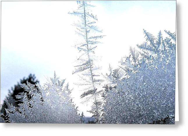 Intrigue Greeting Cards - Jack Frosts Ice Forest Greeting Card by Will Borden