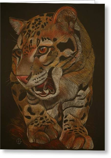Jaguars Pastels Greeting Cards - Jaguar Greeting Card by Stephanie L Carr