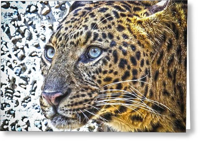 Jaguars Greeting Cards - Jaguar Greeting Card by Steve McKinzie