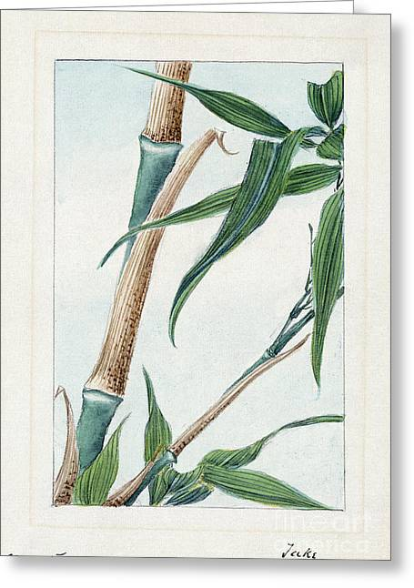 1870s Greeting Cards - JAPAN: BAMBOO, c1870s Greeting Card by Granger