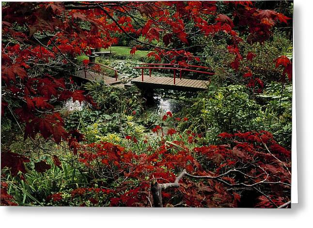 Garden Statuary Greeting Cards - Japanese Garden, Through Acer In Greeting Card by The Irish Image Collection