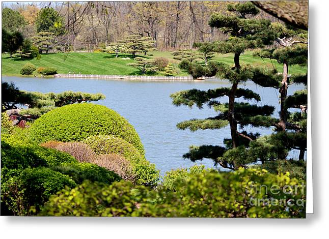Chicago Botanic Garden Greeting Cards - Japanese Garden View Greeting Card by Nancy Mueller