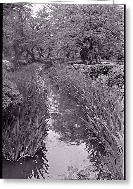 Black And White Greeting Cards - Japanese Garden with Irises Greeting Card by Julie VanDore