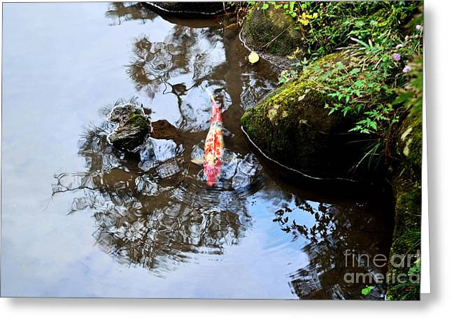 Decorative Fish Greeting Cards - Japanese Koi Pond Greeting Card by Dean Harte