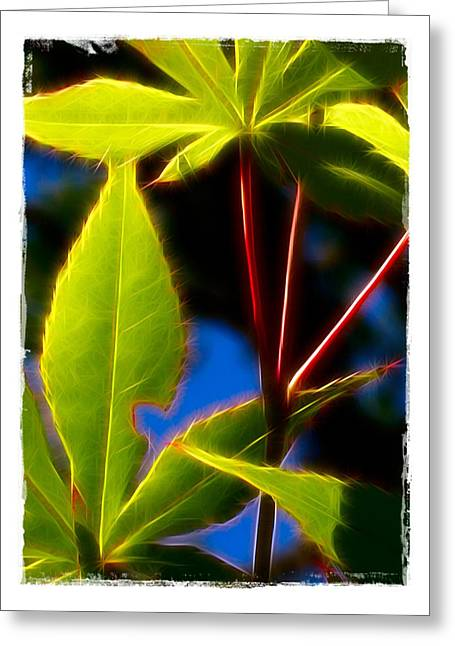 Arkansas Greeting Cards - Japanese Maple Leaves Greeting Card by Judi Bagwell