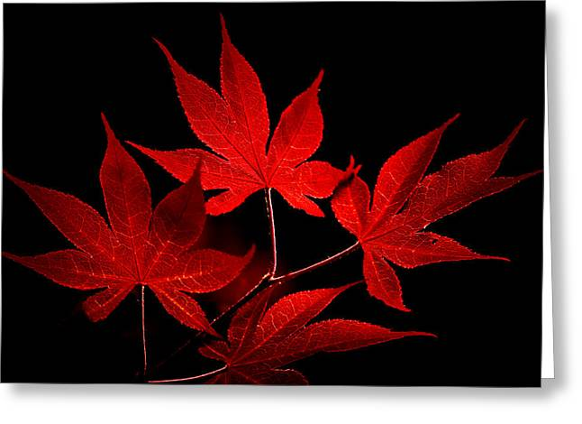 Maple Photographs Greeting Cards - Japanese Maple Greeting Card by Rich Leighton