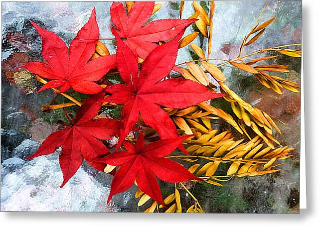 Photographs With Red. Greeting Cards - Japanese Maple with Locust Leaves Greeting Card by Beth Akerman