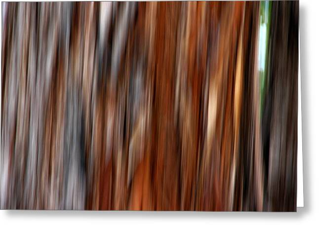 Michelle Wrighton Greeting Cards - Jarrah II Greeting Card by Michelle Wrighton