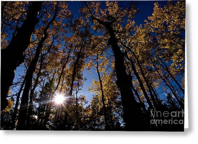 Candian Greeting Cards - Jasper - Autumn Aspens Greeting Card by Terry Elniski