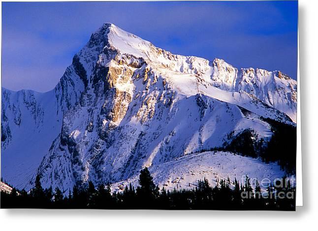 Leah Greeting Cards - Jasper - Leah Peak Greeting Card by Terry Elniski