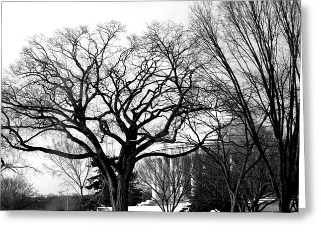 Black And White Photos Pyrography Greeting Cards - Jefferson Memorial - Distant View Greeting Card by Fareeha Khawaja