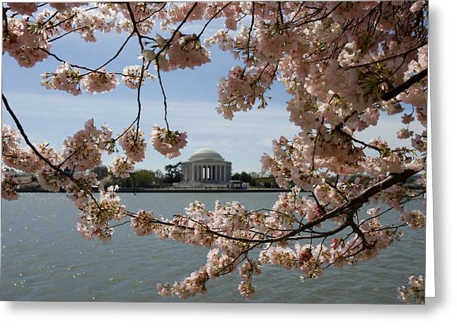 Cherry Blossom Festival Greeting Cards - Jefferson Memorial Framed by Cherry Blossoms Greeting Card by Brendan Reals