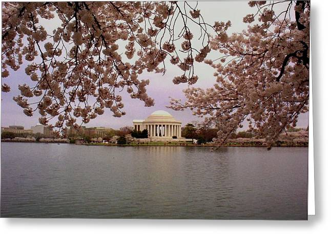 Cherry Blossom Festival Greeting Cards - Jefferson Memorial Greeting Card by Joyce Kimble Smith