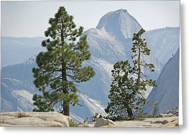 Pinus Greeting Cards - Jeffrey Pine And Whitebark Pine Trees Greeting Card by Bob Gibbons