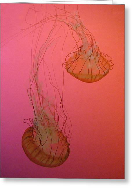 Jelly Fish Greeting Cards - Jellies Greeting Card by Jackie Novak