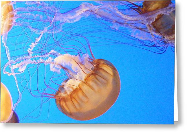 Iphonesia Greeting Cards - Jelly Bulb Greeting Card by Mickey Hatt
