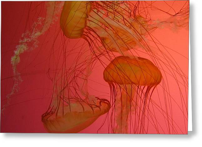 Jelly Fish Greeting Cards - Jelly Dance 2 Greeting Card by Vijay Sharon Govender