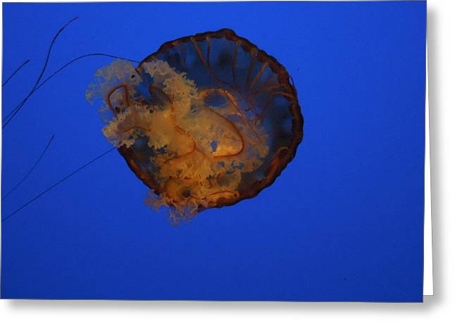 Jelly Fish In Water Greeting Cards - Jelly Fish Greeting Card by Chad and Stacey Hall