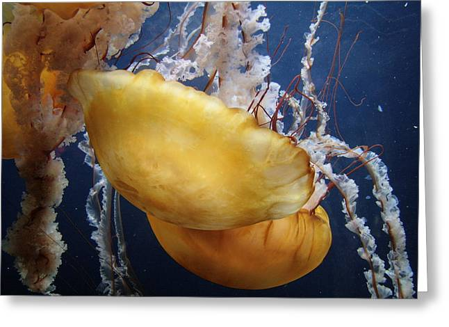 Jelly Fish Greeting Cards - Jelly Fish Greeting Card by Johnathan Evans