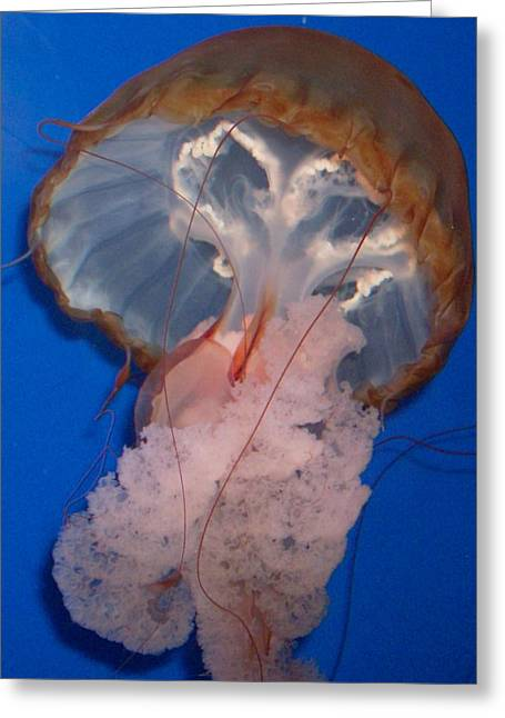 Aquarium Fish Greeting Cards - Jelly fish Greeting Card by Kaylee Axberg