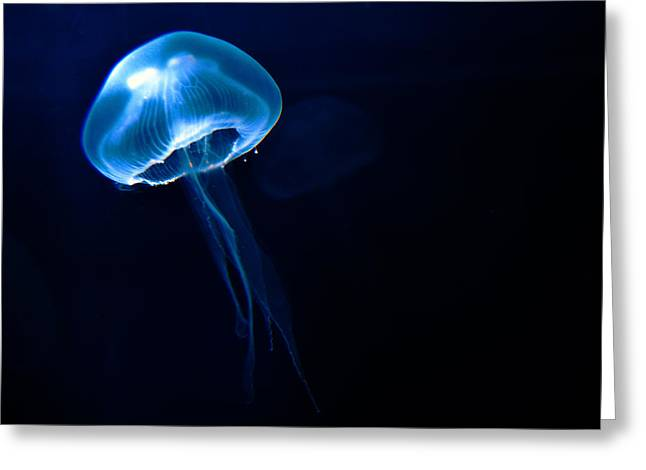 Tim Greeting Cards - Jelly Greeting Card by Tim Nichols
