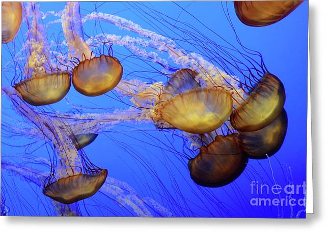Snorkelling Greeting Cards - Jellyfish 6 Greeting Card by Bob Christopher