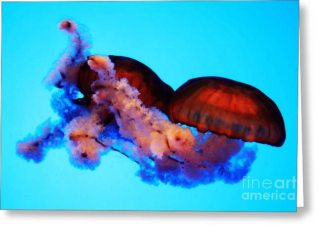 Abstract Digital Photographs Greeting Cards - Jellyfish Drama - Digital Art Greeting Card by Carol Groenen