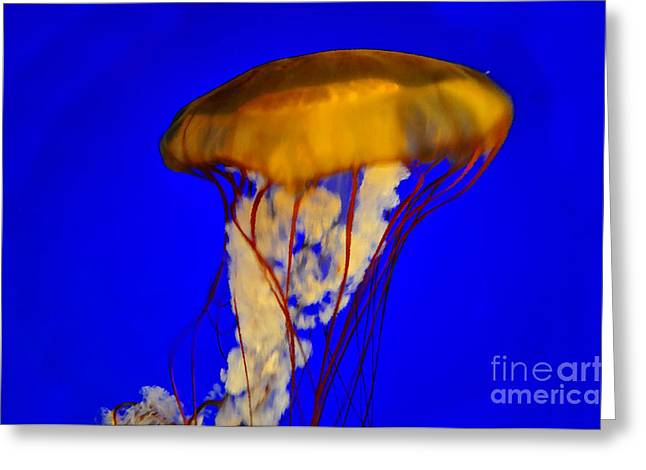 Jellyfish Art Greeting Cards - Jellyfish in blue waters Greeting Card by David Lee Thompson
