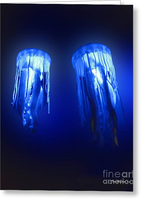 Minchak Greeting Cards - Jellyfish in Maui Ocean Center Greeting Card by Joan  Minchak