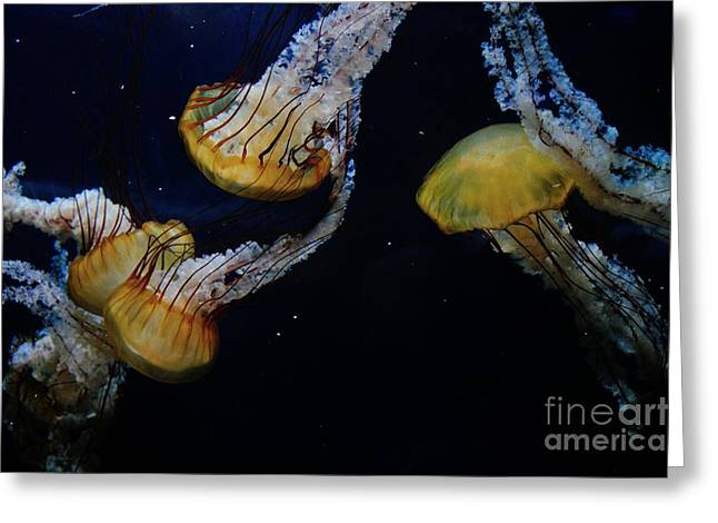 Fluorescent Yellow Greeting Cards - Jellyfish Greeting Card by Joe  Ng