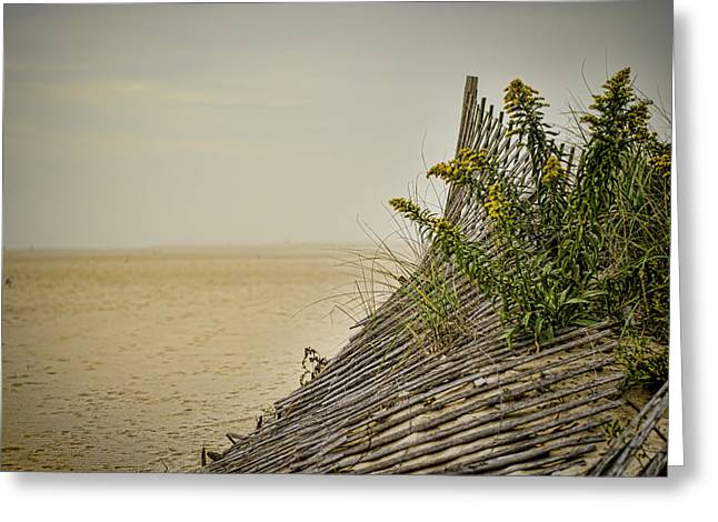 Weed Line Greeting Cards - Jersey Shore Greeting Card by Heather Applegate