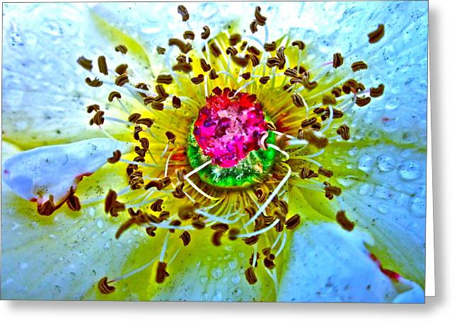 Floral Photographs Greeting Cards - Jive Greeting Card by Gwyn Newcombe