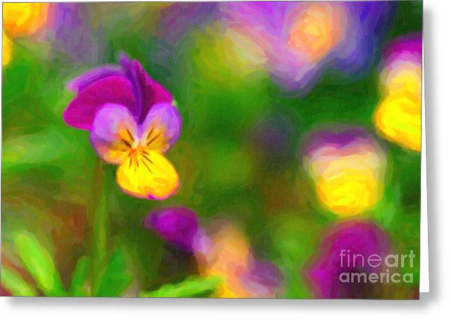 Johnny Jump Up Pansy Greeting Cards - Johnny Jump Up Greeting Card by Verena Matthew