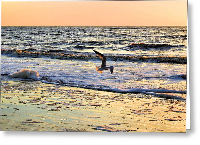 Flying Seagull Greeting Cards - Jonathan Livingston Seagull Greeting Card by Kristin Elmquist