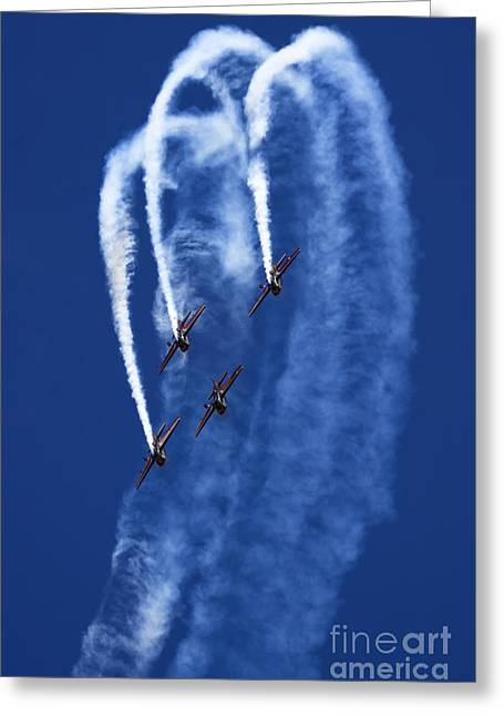 Jordanian Greeting Cards - Jordanian Falcons Greeting Card by Angel  Tarantella