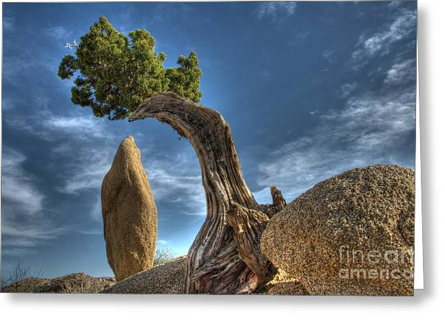 Lone Pine Greeting Cards - Joshua Tree Sentinals Greeting Card by Bob Christopher