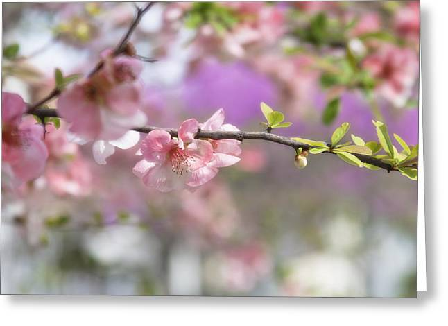 Pink Flower Branch Photographs Greeting Cards - Joy flowers Greeting Card by Toni Hopper