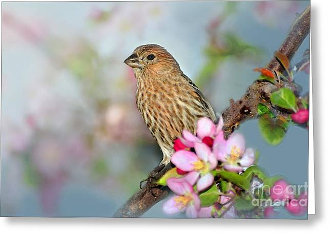 House Finch Greeting Cards - Joy of Spring Greeting Card by Betty LaRue