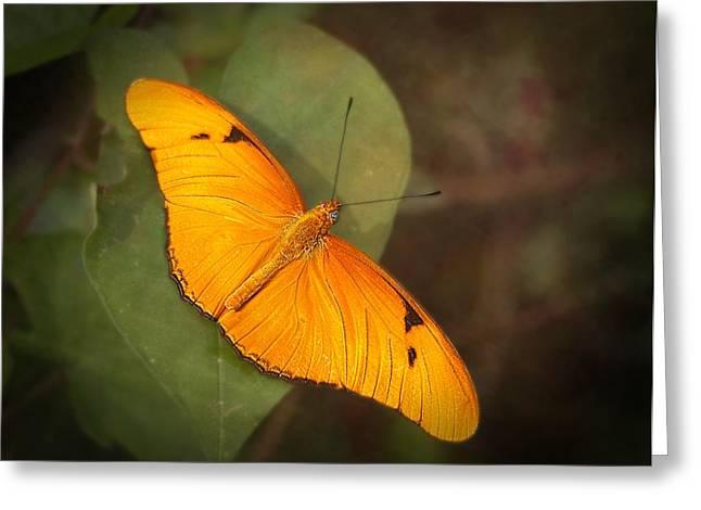 Arthropoda Greeting Cards - Julia Dryas Butterfly-2 Greeting Card by Rudy Umans