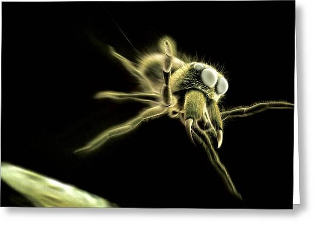 Predating Greeting Cards - Jumping Spider, Computer Artwork Greeting Card by Ian Cuming