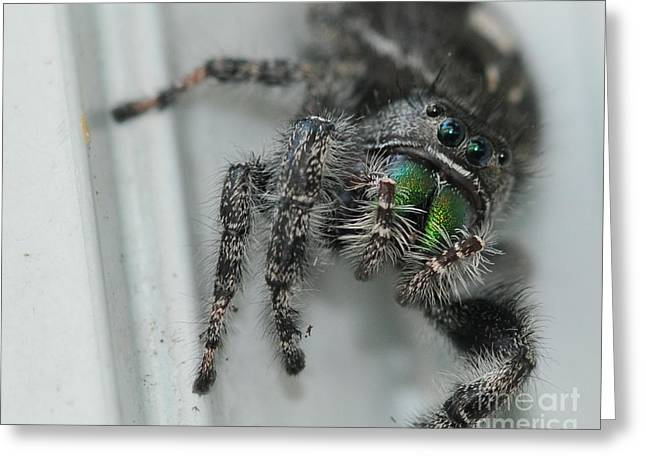 Jumping Spider Greeting Card by Paul Ward