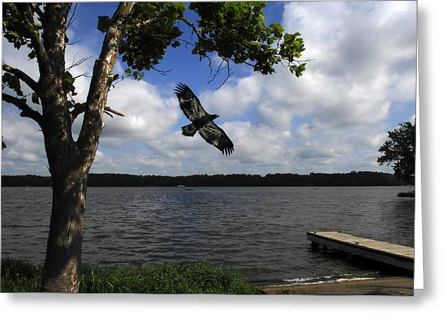 On The Wings Of The Morning Greeting Cards - Junenile Eagle Rocky Fork Lake Greeting Card by Randall Branham