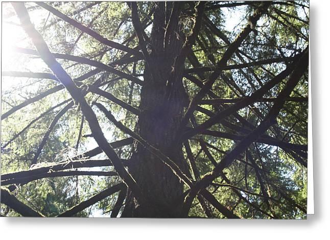 Climb Tree Greeting Cards - Jungle Gym Greeting Card by Joshua Sunday