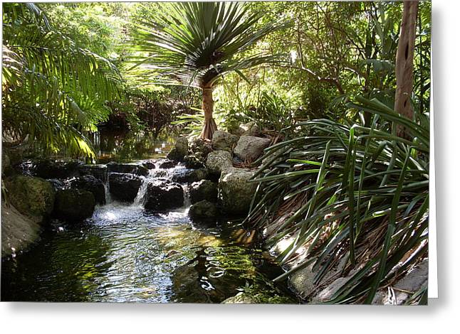 Babbling Greeting Cards - Jungle waterfall in Miami Greeting Card by Lisa A Bello