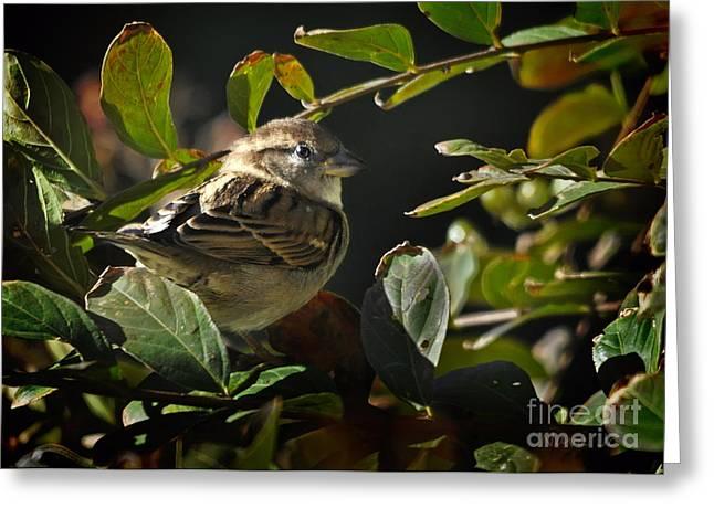 Pea Ridge Greeting Cards - Junior Sparrow Greeting Card by Nava  Thompson
