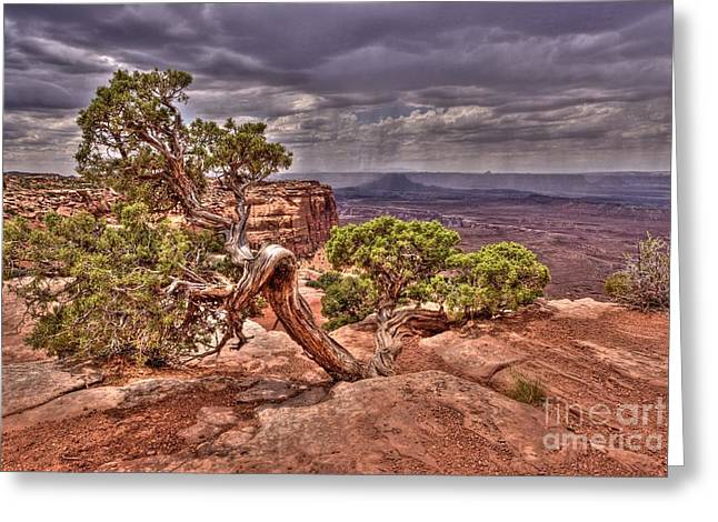 Old Western Photos Digital Art Greeting Cards - Junipers Storm Greeting Card by John Kelly