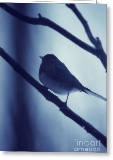 Winter Photographs Greeting Cards - Junko Greeting Card by HD Connelly